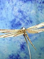 Lomprich Libel Large 200cm