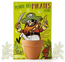 Pirate and his banana tree to sow