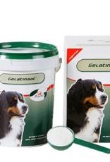 Primeval Hond Gelatinaat 500gr