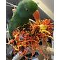 Gaaien-frutsels Birdy Halter