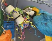 Mijn Blauw/gele Ara Zoey