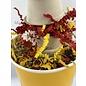Gaaien-frutsels De bloemen parade