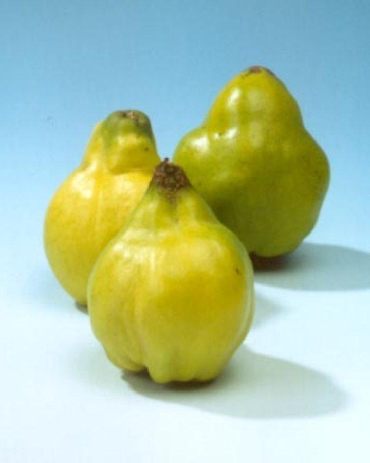 Cydonia oblonga 'Leskovacz' | Kweepeer Appelvorm | Wortelgoed