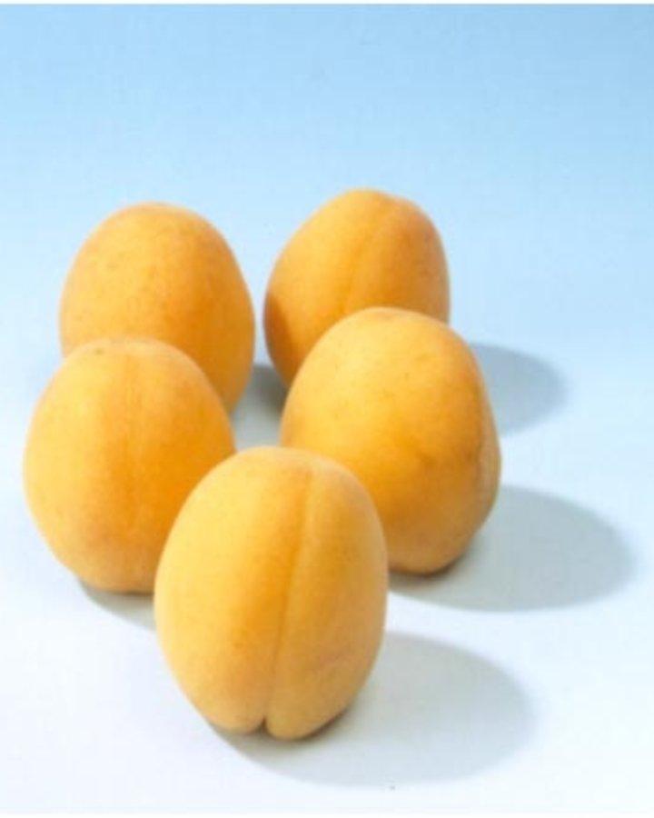 Prunus armeniaca 'Hongaarse' / Abrikoos