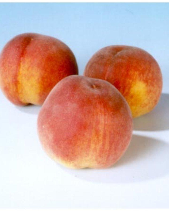 Prunus p. 'Peregrine' | Perzikboom | Container