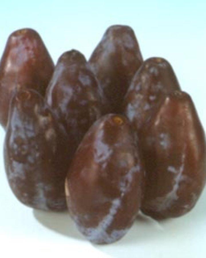 Prunus d. 'Betuwse Kwets'   Bakpruim   Wortelgoed