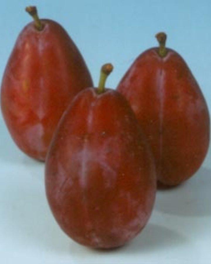Prunus d. 'Damson' | Pruimenboom | Wortelgoed