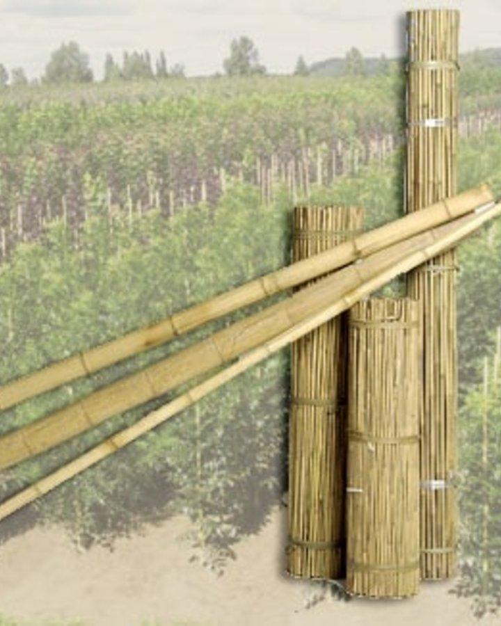 Tonkinstokken   bamboestok    Plantbenodigheden
