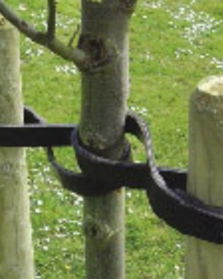 Boomband rubber 70 cm   Boomband    Plantbenodigdheden