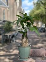MINT GREEN PLANTEN POT GROOT