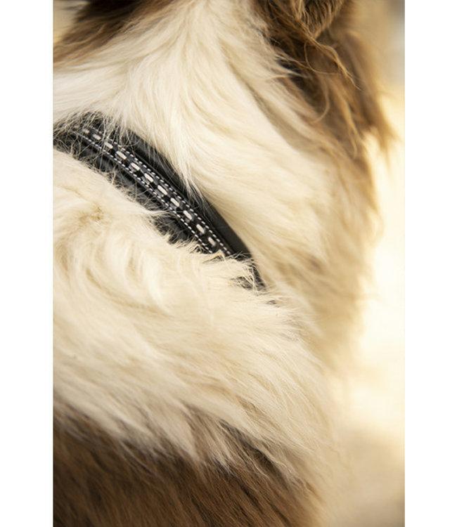 "PÉNÉLOPE ""Point Sellier"" Dog Collar"