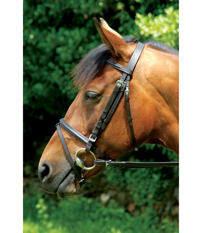 CLASSIC BRIDLE AND REINS