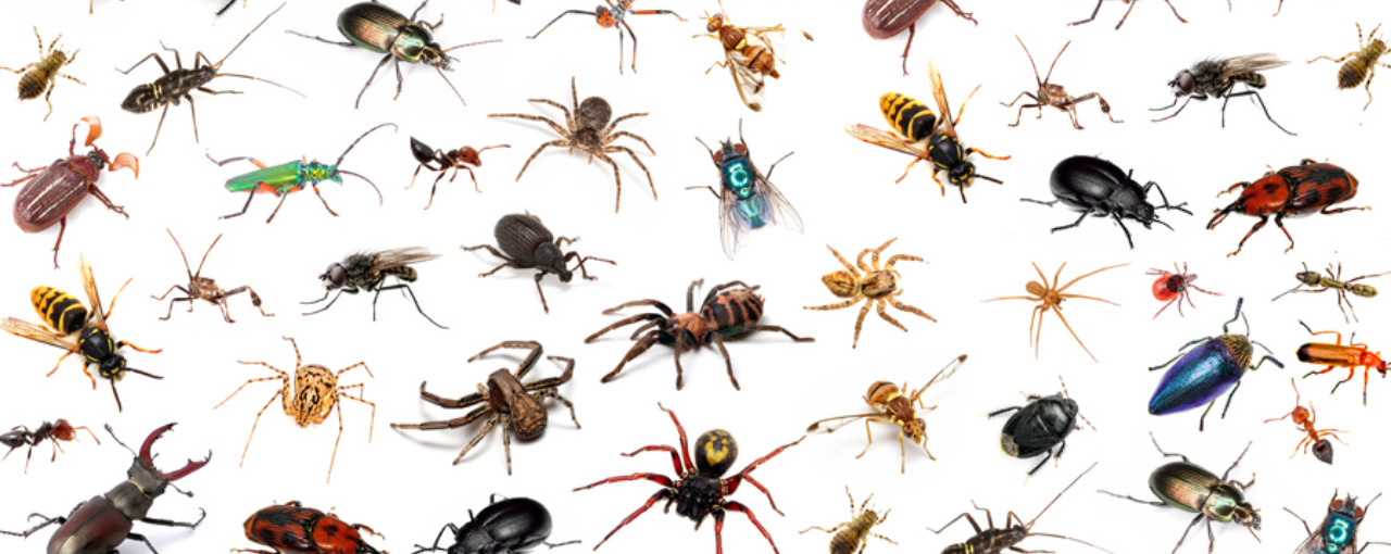 Top 10 insecten