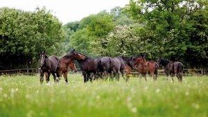 Onderhoud van de paardenweide
