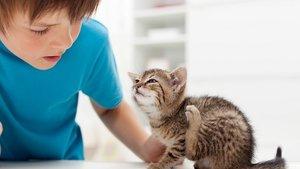 Ongedierte bij de hond of kat. Lees hier alles over wormen, vlooien en teken.