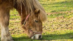 Nieuwe regels registratie paarden