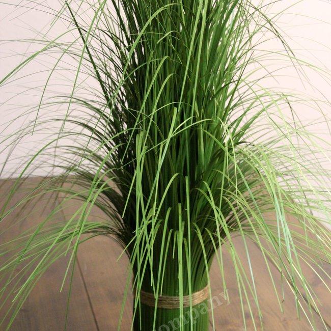 Sierplant gras