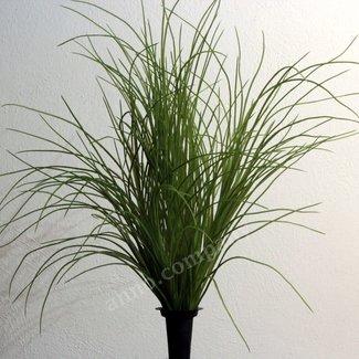 Sierplant Grass Bush
