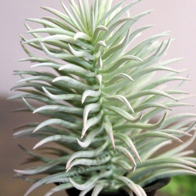 Sierplant Flocking Succulent