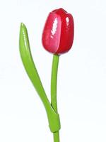 Houten Tulp, Rood Wit