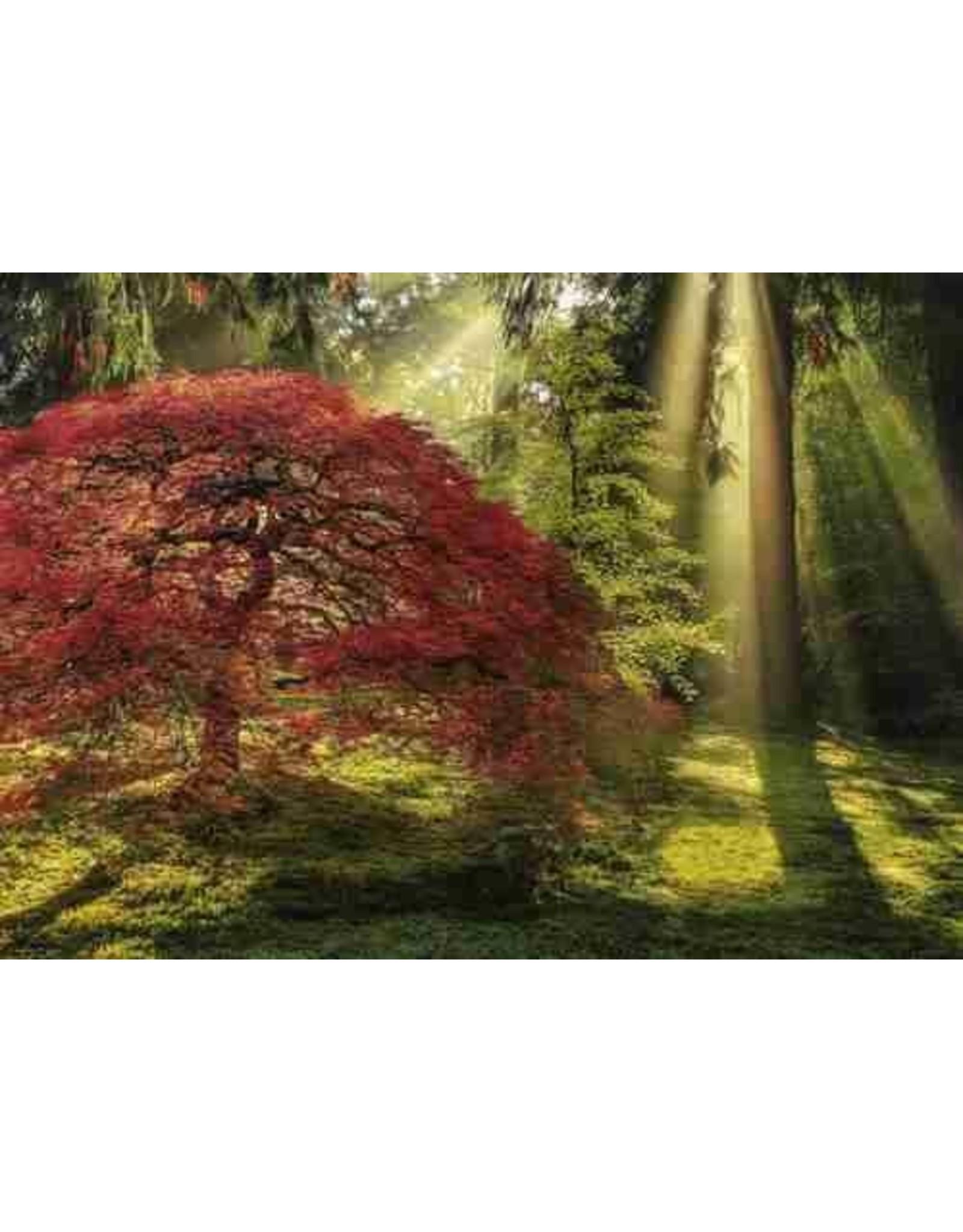 "Heye Magic Forest Puzzel  ""Guiding Light"""