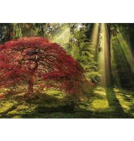"""Heye Magic Forests Puzzle  """"Guiding Light"""""""
