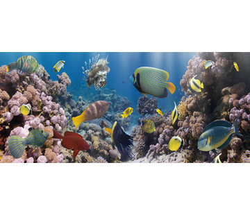 Plexiglas schilderij onderwaterwereld