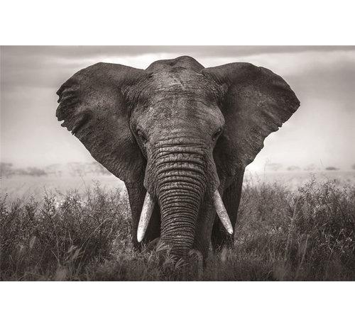 Plexiglas schilderij olifant