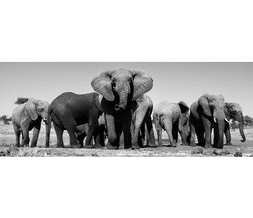 Plexiglas schilderij olifanten