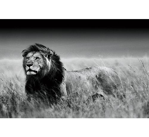 Plexiglas schilderij jagende leeuw