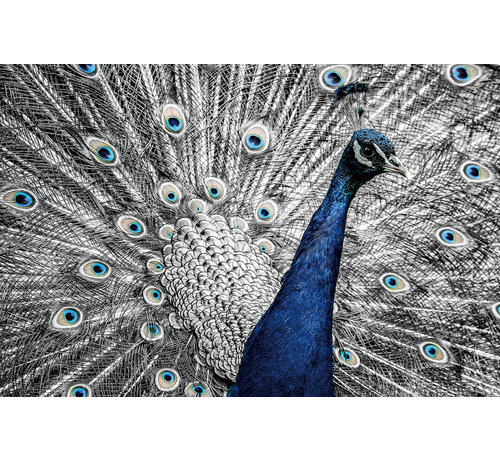 Plexiglas schilderij pauw