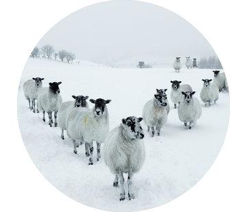 Plexiglas schilderij schapen