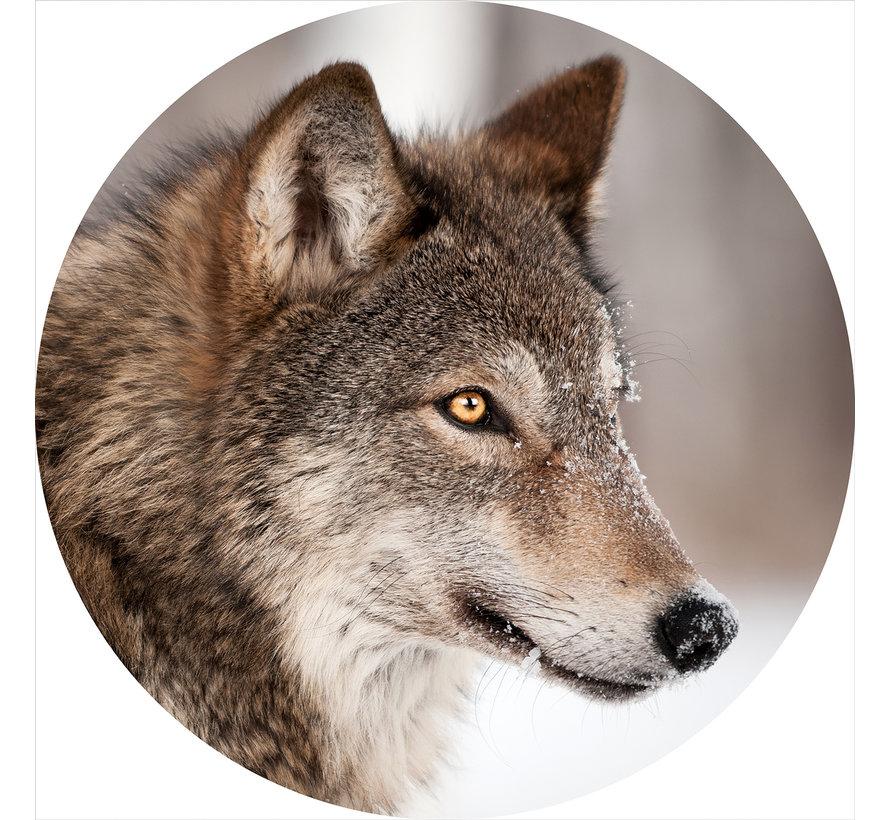 Plexiglas schilderij wolf
