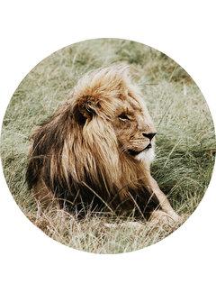 Plexiglas schilderij liggende leeuw - rond