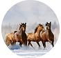 Plexiglas schilderij paarden in water