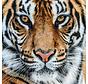 Plexiglas schilderij tijgerkop