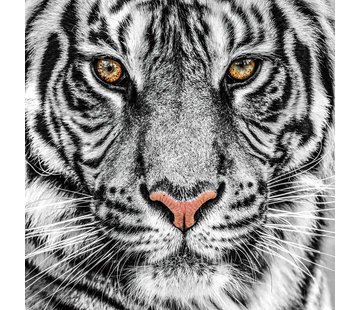 Plexiglas schilderij tijger