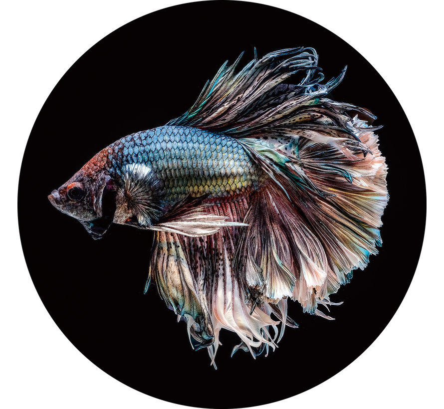 Plexiglas schilderij vis