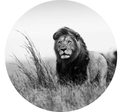 Plexiglas schilderij leeuw zwart wit