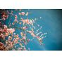 Plexiglas schilderij bloemetjes