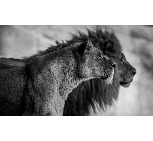 Wandkraft Wildlife 019