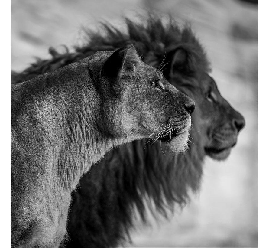 Wildlife 019