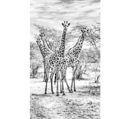 Wandkraft Wildlife 015