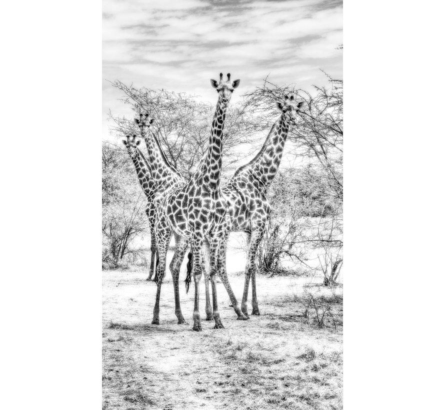 Wildlife 015