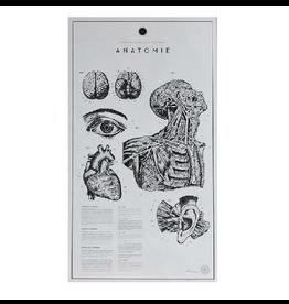 """ATELIER GRAPHIQUE ANATOMIE LITHOGRAPHS PRINT 挂画""""解剖"""" (無裱框)"""