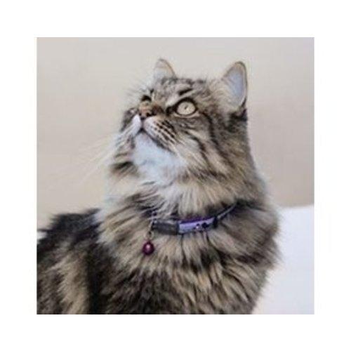 Kattenhalsbandjes