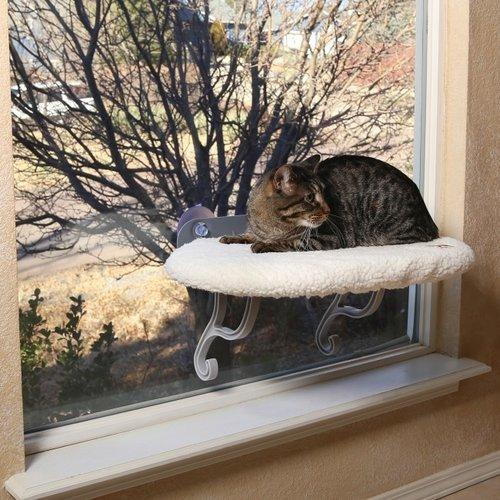 Kattenverblijven