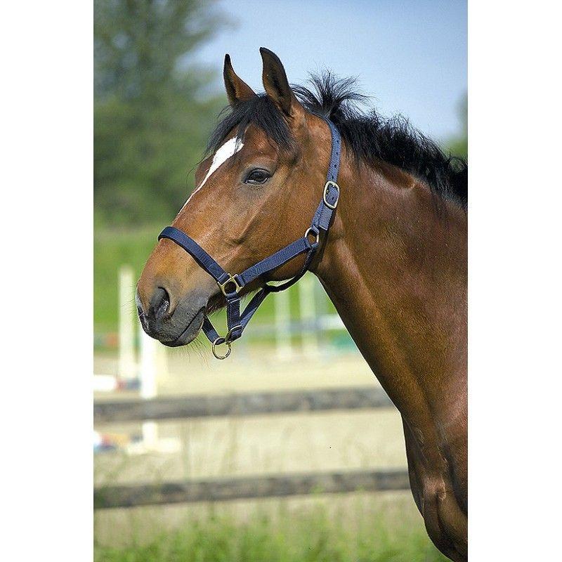 "RIDING WORLD  Ensemble licol et longe ""Club"" pour cheval"