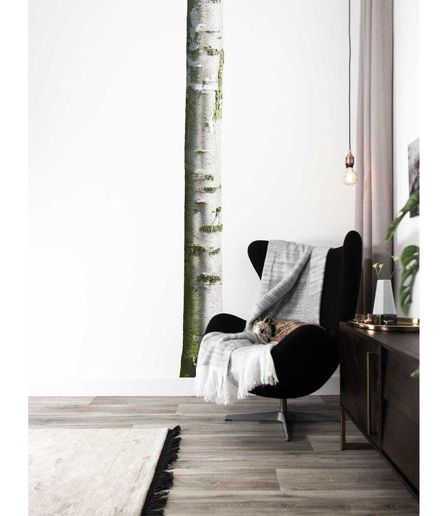 Wall sticker Home Tree 7, 20 x 300 cm