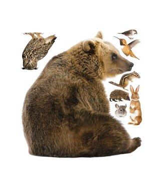 Wall stickers Forest Friends Bear XL & Friends